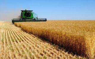 Выращивание пшеницы в России