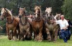 Лошади тяжеловозных пород