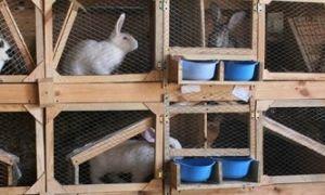 Изготовление клеток для кроликов своими руками: 4 варианта конструкций