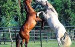 Узнай какое животное ближе всего вам по духу
