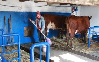 Как сделать своими руками мини ферму для крс