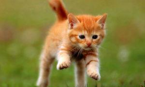 Тест Какое домашнее животное Вам завести