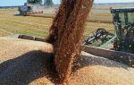 Какой урожай пшеницы можно собирать с 1 гектара