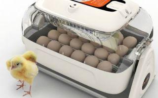 Режимы инкубации куриных яиц и ее таблица