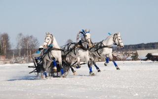 Российские породы лошадей