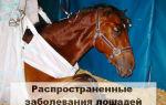 Заболевания лошадей