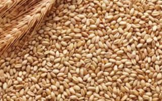 Что представляет собой пшеница