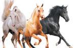 Масти и подмастки у лошадей