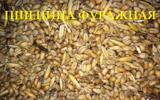 Стандарт фуражной пшеницы