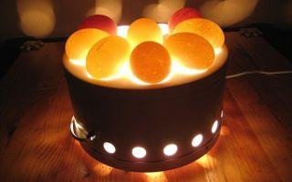 Рекомендации по выбору яиц для инкубатора