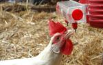 Самостоятельное изготовление поилок для кур