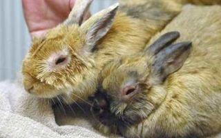 Заболевания кроликов – описание и лечение