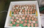 Как проводить закладку яиц в инкубатор