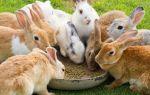 Комбикорм собственного изготовления для кроликов