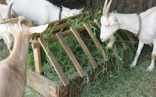 Особенности содержания и лечения коз на частном подворье