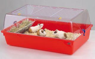 Выбор клетки для морских свинок