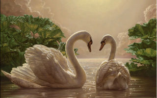 Что символизирует лебедь
