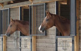 Как содержат лошадей
