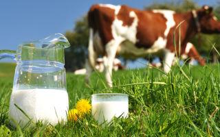 Как повысить надои молока