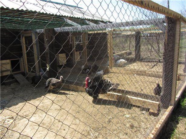 Доступ в выгул из птичника обеспечивается лазами, которые нужно снабдить дверцами.