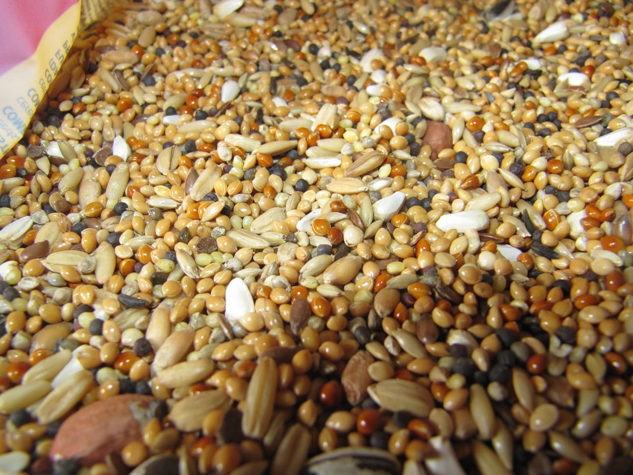 Зерновая смесь для кур