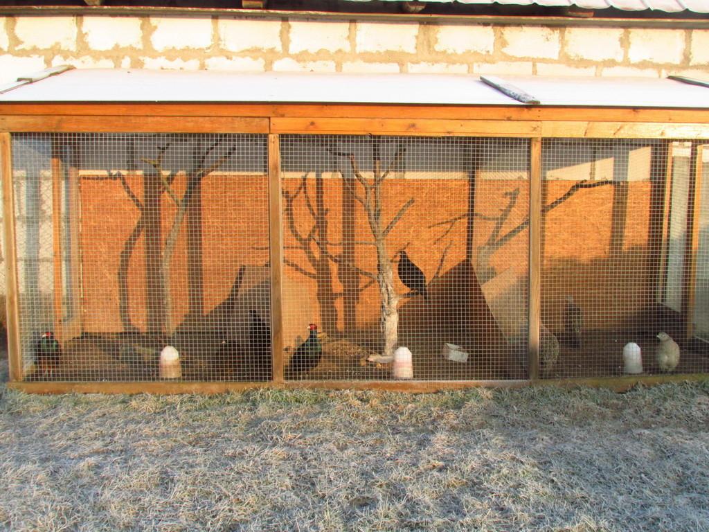 Пристроенный вольер для фазанов