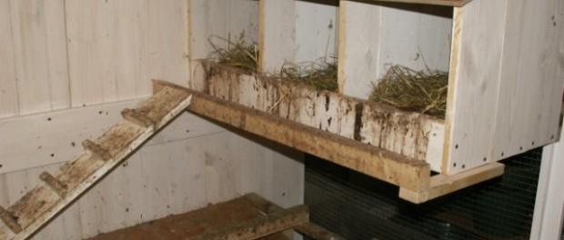 Гнезда для индеек