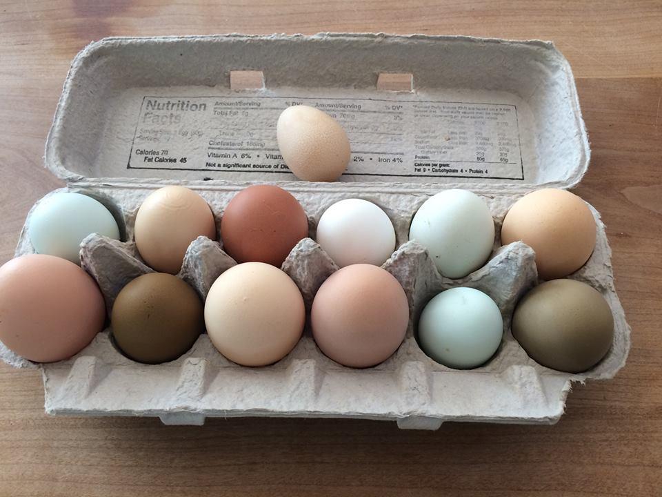 Цвета яиц