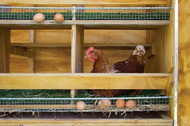Гнезда с яйцесборником