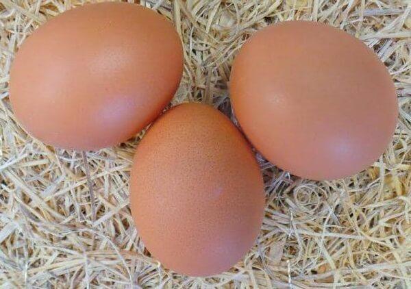 Яйца Ломан Браун