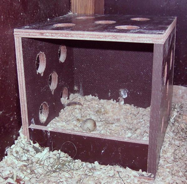 Гнездо для перепелок
