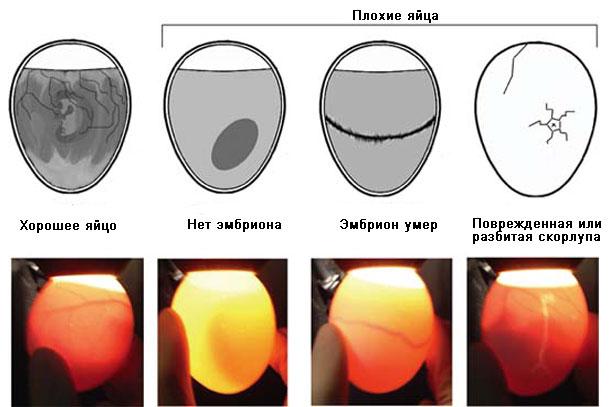 Признаки плохих яиц