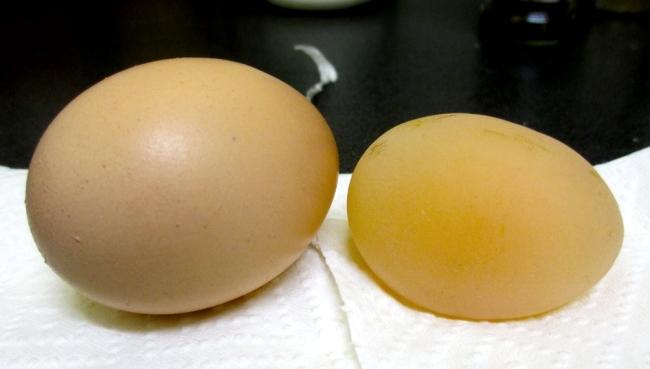 Яйца без скорлупы