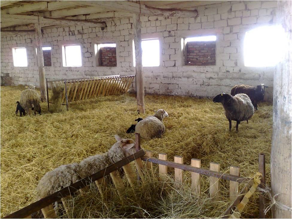 Как сделать загон для овцы 91