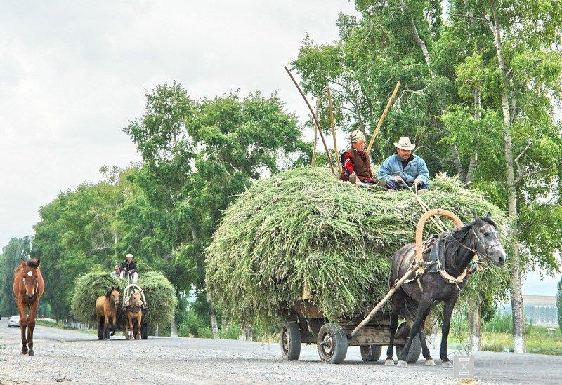 Заготовка кормов для овец