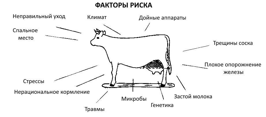 Что такое мастит и как его лечить у коровы