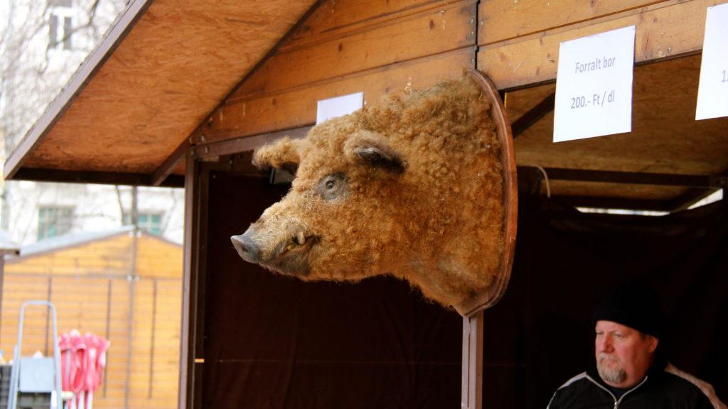 Но фестивале свиньи мангалицы
