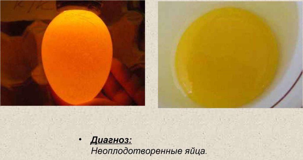 Неоплодотворенные яйца