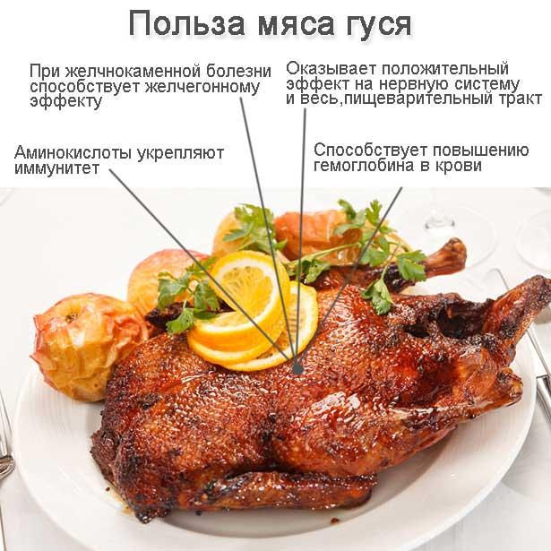 Польза гусиного мяса