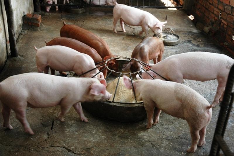 Кормушка для свиней своими руками с фото 463