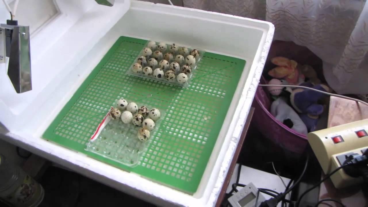 Поворот яиц своими руками фото 827