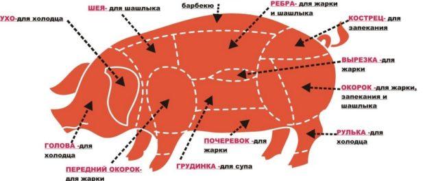 Схема разделки туши свинины