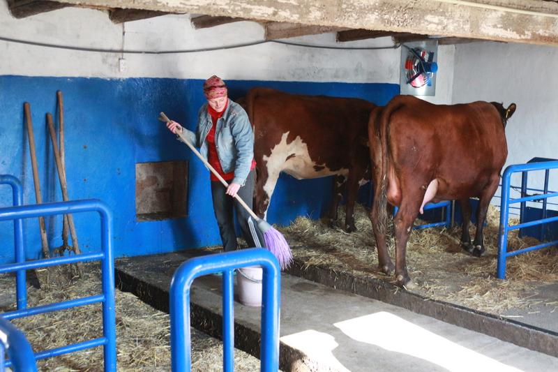 Как сделать семейную ферму