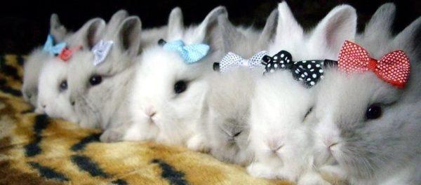 Декоративные кролики - милые создания
