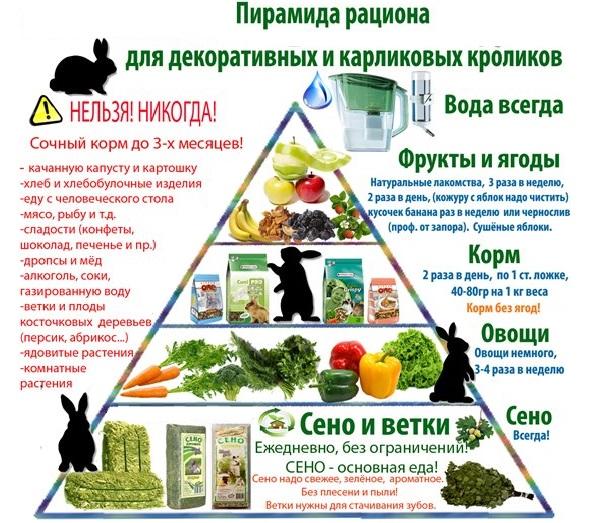 Пирамида кормов для мини кроликов
