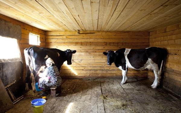 Домашний коровник на 2 коровы
