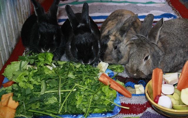 Питание для кроликов домашних условиях 745