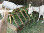 Кормушка для закрытого содержания коз