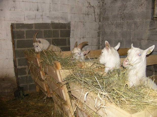 Зимний сарай для коз