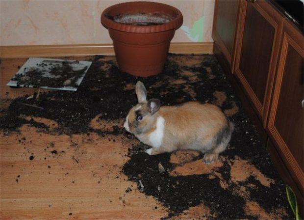 Кролик разрыл цветок